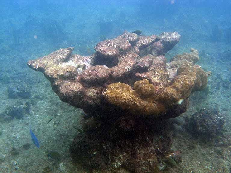 Port Of Puerto Vallarta  Map  Webcam  Cruise Ships